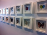 Pretty butterfly painted pictures