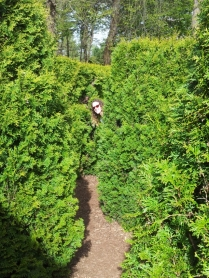 In the maze, can you spot me?!