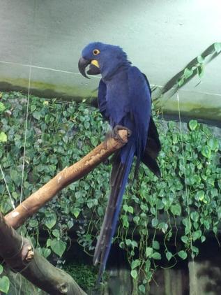 Very loud parrot