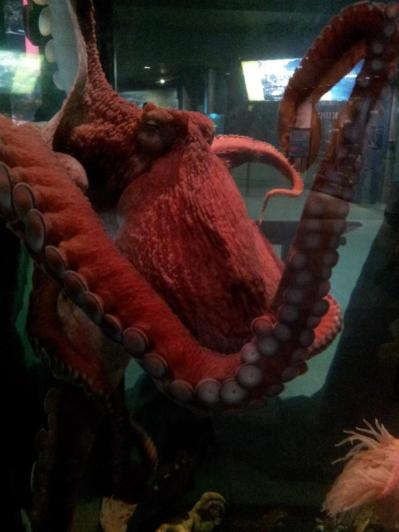 This octopus was huge...and kind of gross