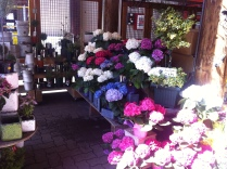 Pretty flowers at the entrance to the market