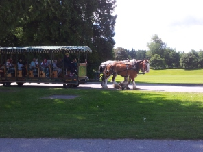 Beauty horses pulling a tour carriage
