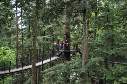At Capilano Bridge in the treetop walk