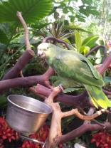 Another picture of a parrot cause why not?