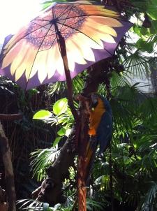 Under his umbrella