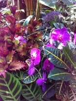 Flowers in the Bio-Dome